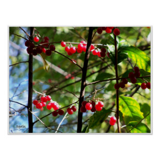 Winter Red Berries Fine Print Poster