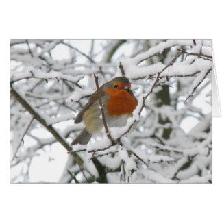 Winter Robin Luxury Christmas Card