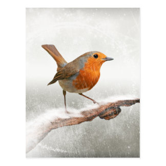 Winter Robin Redbreast Postcard