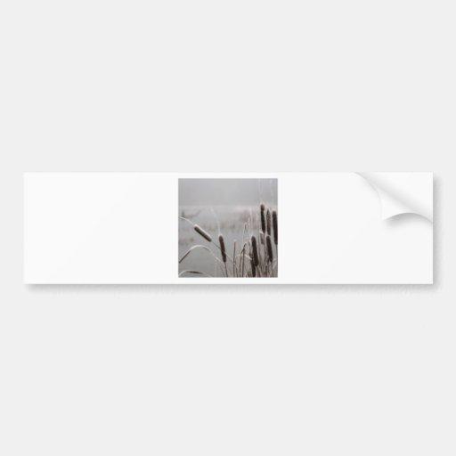 Winter Scene Frosted Cattails Bumper Sticker
