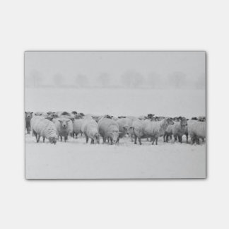 Winter sheep flock post-it notes