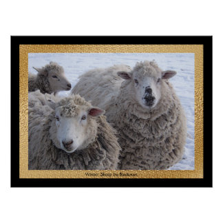 Winter Sheep Poster
