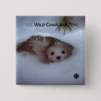 Winter - Short-Tailed Weasel 2 Inch Square Button