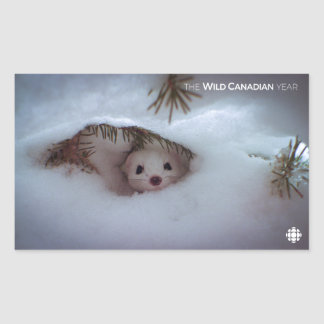 Winter - Short-Tailed Weasel Sticker
