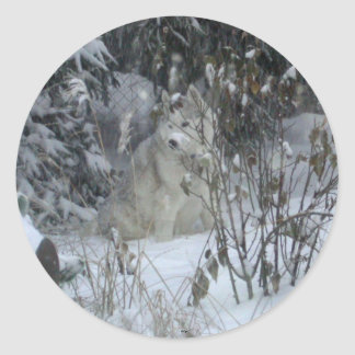 Winter Siberian Husky Sticker