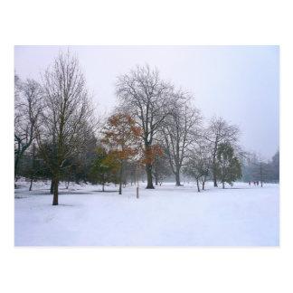Winter Snow, Bute Park, Cardiff, Wales Postcard