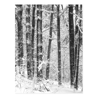 Winter Snow Postcard
