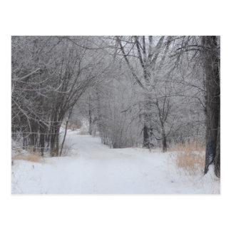 Winter Solitude Postcard