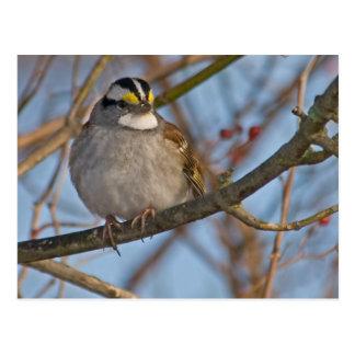 Winter Sparrow Postcard