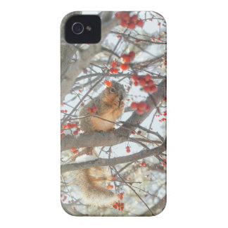 Winter Squirrel In Berry Tree Case-Mate iPhone 4 Cases