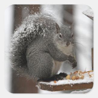 Winter Squirrel on a Sticker