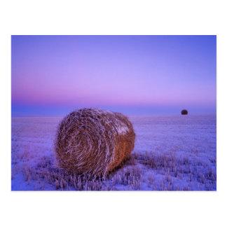 Winter Straw Bales near Cartwright North Postcard
