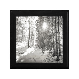 Winter Sunshine Forest Shades Of Gray Gift Box