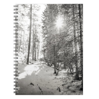 Winter Sunshine Forest Shades Of Gray Notebooks