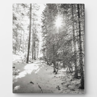Winter Sunshine Forest Shades Of Gray Plaque