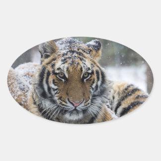 Winter Tiger Face Oval Sticker