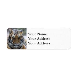 Winter Tiger Face Return Address Label