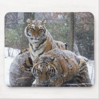 Winter Tigers Mouse Pad