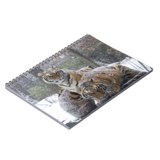 Winter Tigers Notebook