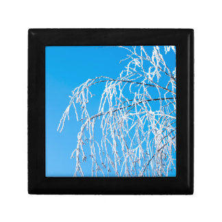 Winter tree branches covered with frost snow gift box