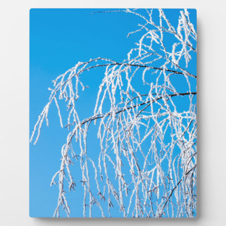 Winter tree branches covered with frost snow plaque