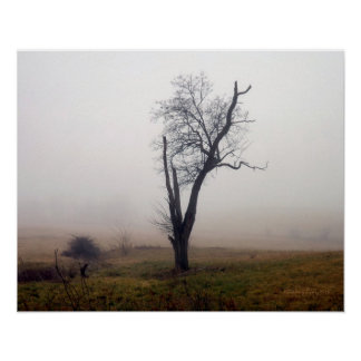 Winter Tree in Foggy Meadow #2 Poster