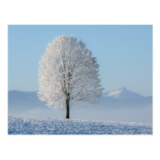 Winter Tree Postcard