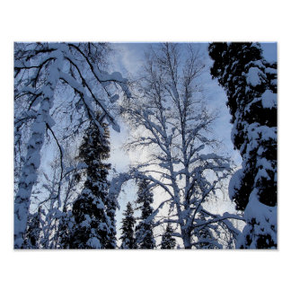 Winter Tree Scene from North Pole, Alaska Poster