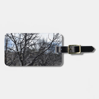 Winter Trees Photograph Bag Tag