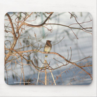 Winter Waxwing Wildlife Nature Photo Mousepad