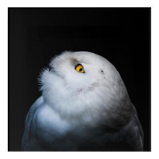 Winter White Snowy Owl Acrylic Wall Art
