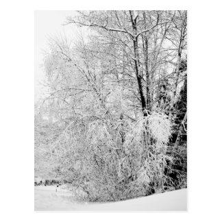 Winter Whites Postcard