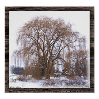 Winter Willow- Matted Poster