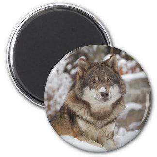 Winter Wolf 2 Inch Round Magnet