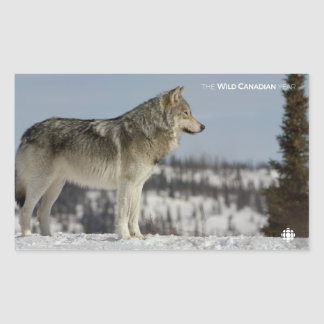 Winter - Wolf Sticker