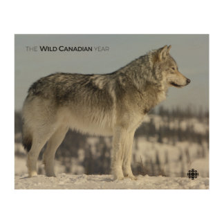 Winter - Wolf Wood Wall Art