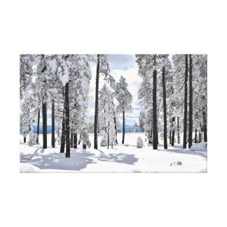 Winter wonder in Arizona Canvas Print