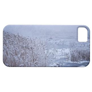 Winter Wonder Wetlands Photo iPhone 5 Covers