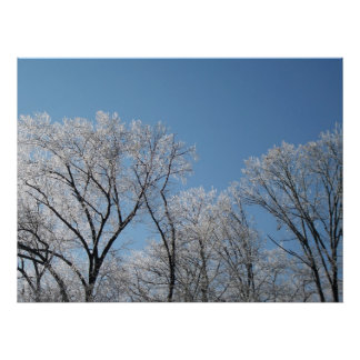 Winter Wonderland with Iced Trees Poster