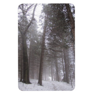 Winter woodland path magnet
