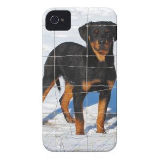 Winterland Rottweiler iPhone 4 Case-Mate Cases