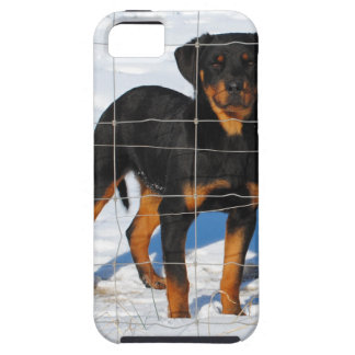 Winterland Rottweiler iPhone 5 Cover