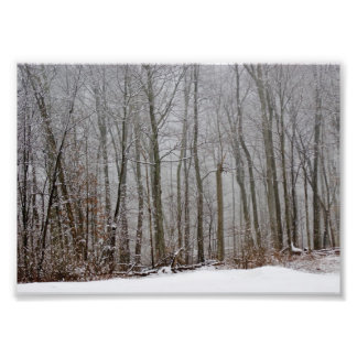 Winters Fog 7x5 Photographic Print
