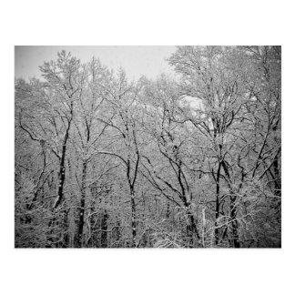 Winter's last breath postcard