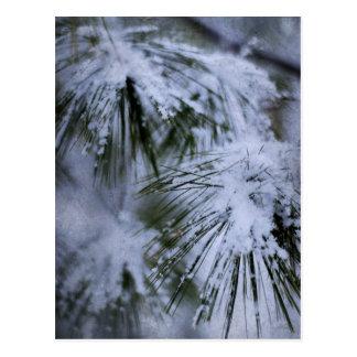 Wintery Pine Postcard