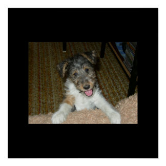 wire fox terrier cute pup poster