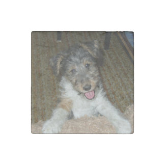 wire fox terrier cute pup stone magnets
