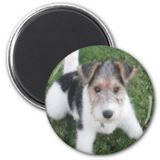 Wire Fox Terrier Puppy Magnet