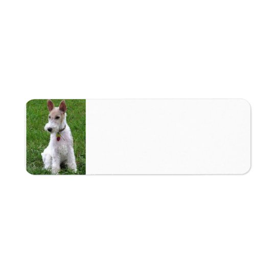 wire fox terrier sitting.png