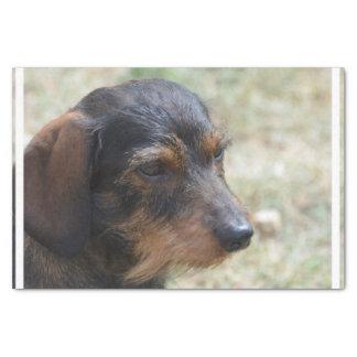 Wire Haired Daschund Dog Tissue Paper